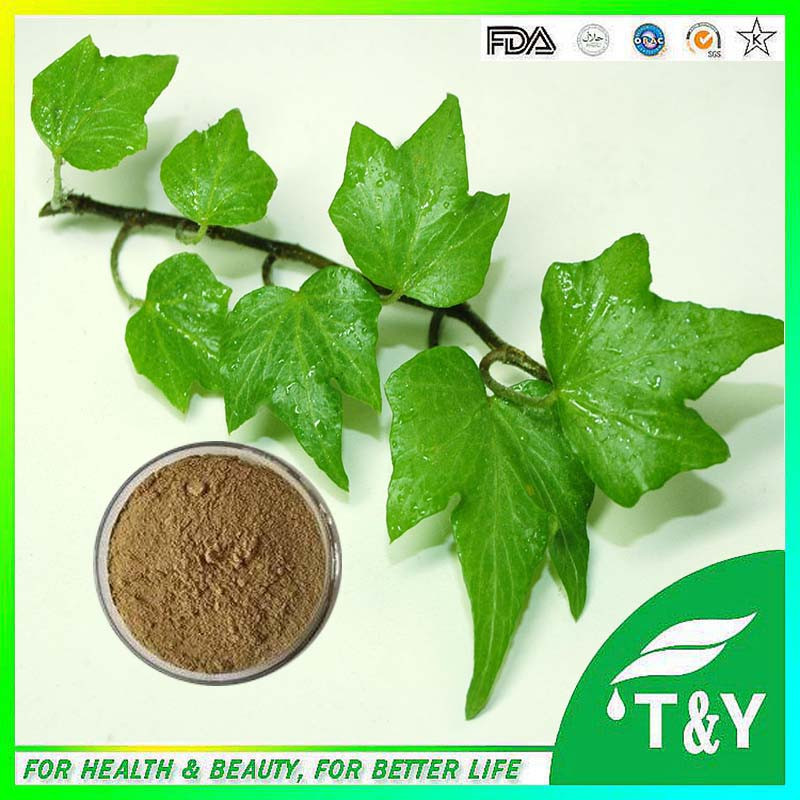 Hot Sale GMP Certificate 100% Pure Natural Hedera Helix extract<br><br>Aliexpress