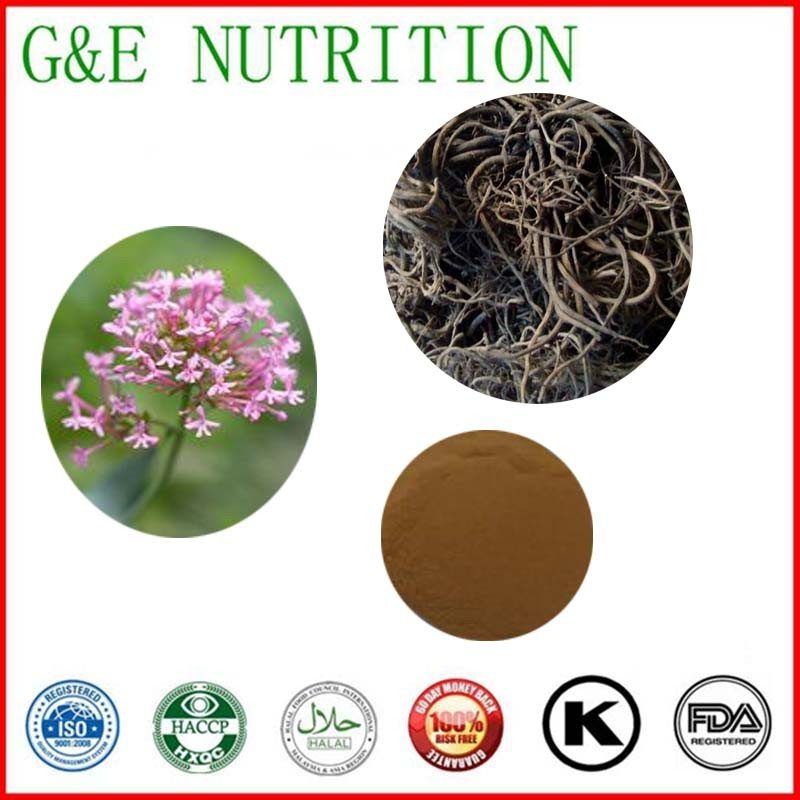 1000g Valeriana officinalis/ Valerian Extract with free shipping