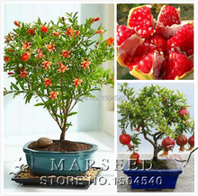 20 pcs/bag  Pomegranate bonsai seeds home plant Delicious fruit seeds very big and sweet for home garden plant sprouting 95%(China (Mainland))