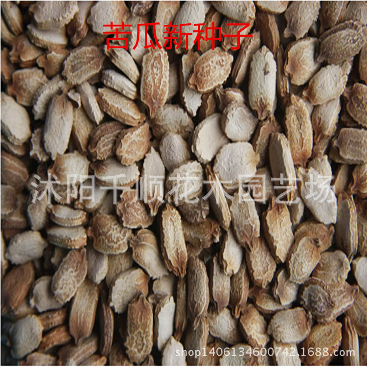 New mining wholesale vegetable seed quality seed Bitter gourd seeds litchi Kam goal of high yield bitter seed 200g/lot(China (Mainland))