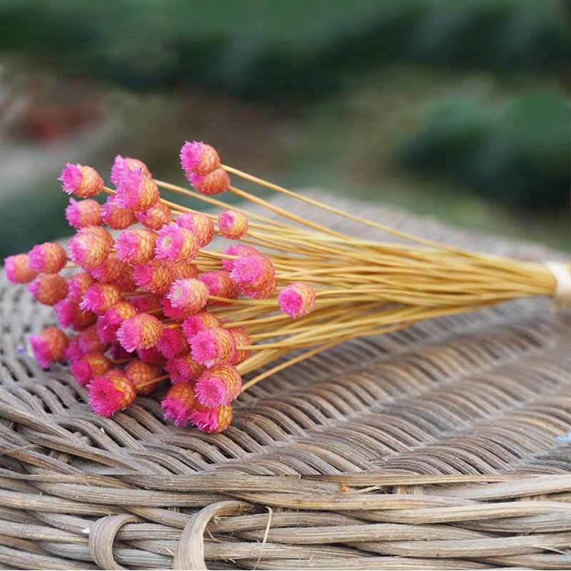 50pcs/lot Home Decor Dried Flower Bouquet Natural Dried Flowers Wedding Party Decorative Photography Props P20