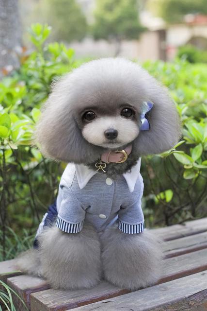 Cotton Pet Jumpsuit