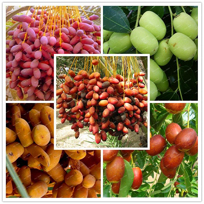 hot russian dating dates fruit