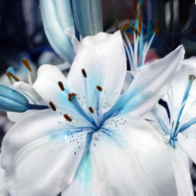 achetez en gros bleu fleur de lys en ligne des grossistes bleu fleur de lys chinois. Black Bedroom Furniture Sets. Home Design Ideas