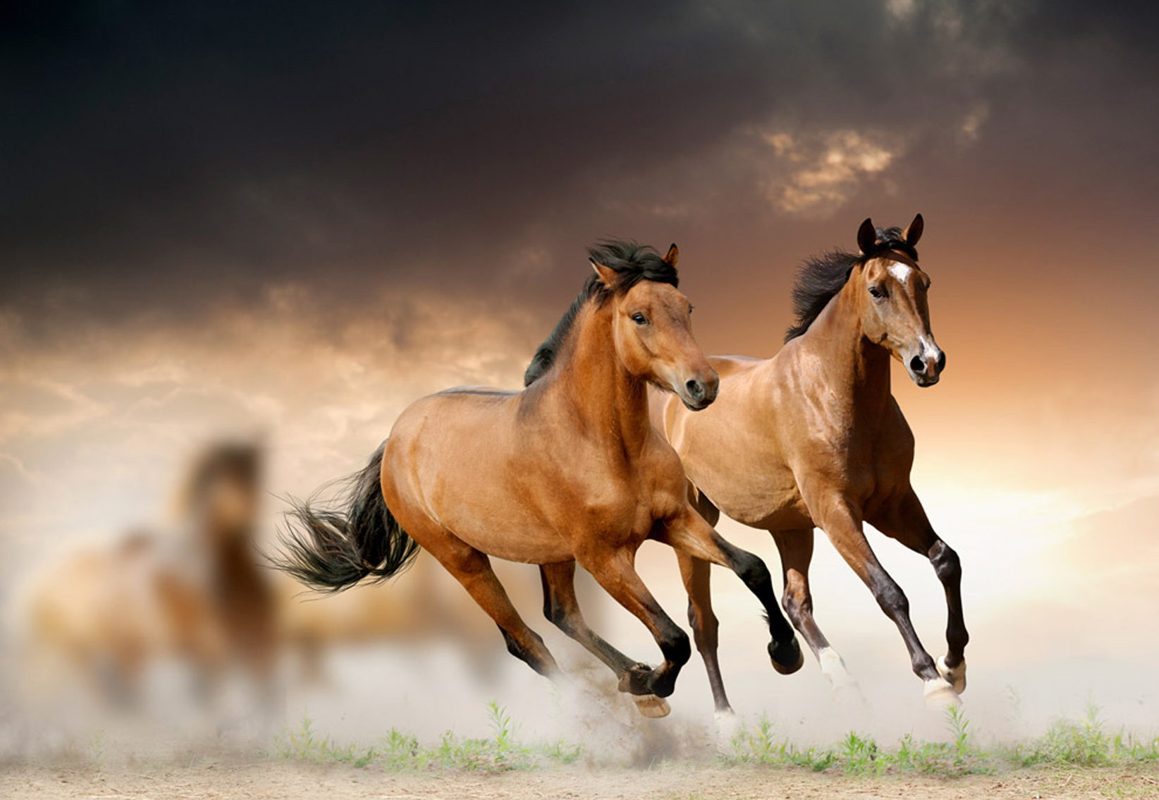 hot sale 5D Diamond painting two horse aniamls Home decor Wall painting gift square diamond factory price 58x40cm LLLB935(China (Mainland))