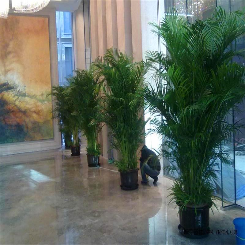 bambou plantes d 39 int rieur achetez des lots petit prix bambou plantes d 39 int rieur en. Black Bedroom Furniture Sets. Home Design Ideas