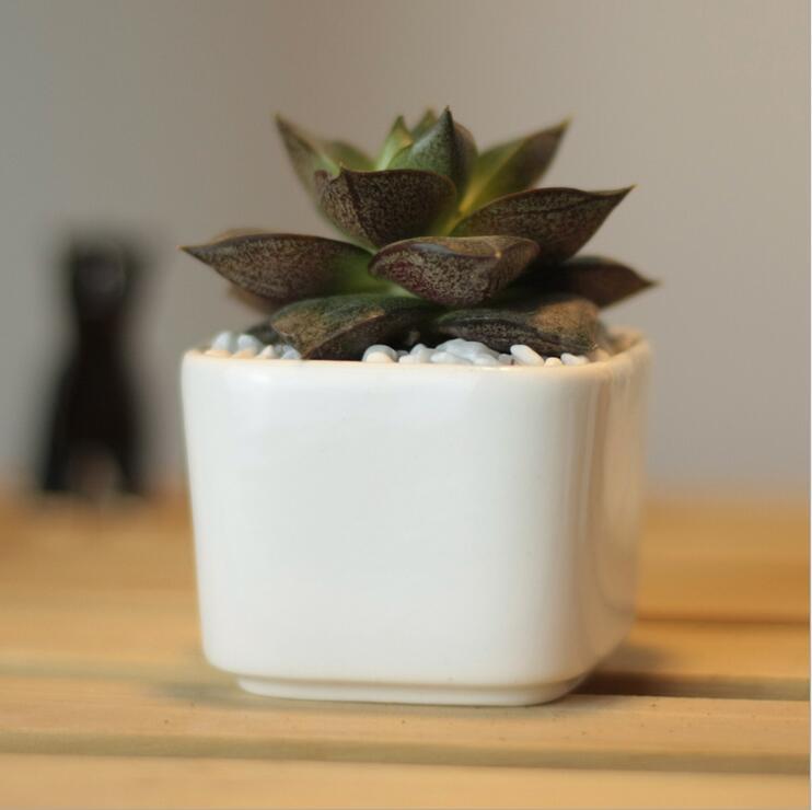 Creative simple white mini fleshy pots ceramic pot small square table freeshipping(China (Mainland))