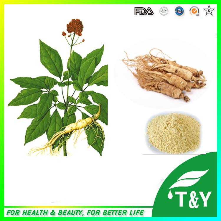 Manufacturer supply ginseng extract,low pesticide red ginseng extract, Korean red ginseng extract 1000g