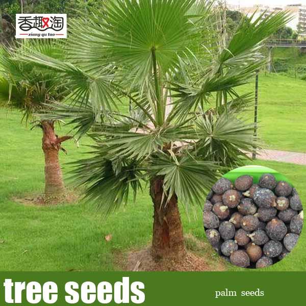 Compra ornamentales semillas de rboles online al por for Plantas perennes exterior