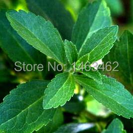 Stevia Seeds, Stevia Herbs Seeds Green Herb, Stevia rebaudiana Semillas for Garden Planting - 200 particles free Shipping(China (Mainland))