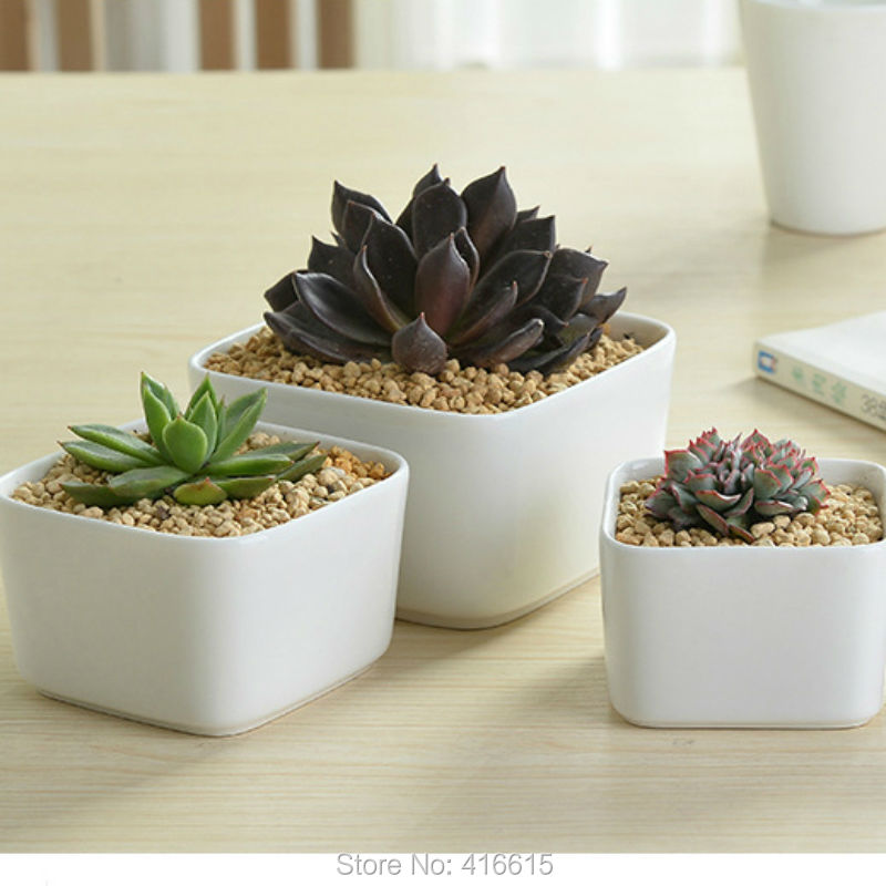 Compare Prices On Large Ceramic Planter Online Shopping