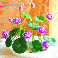To get coupon of Aliexpress seller $3 from $10 - shop: Seed Story in the category Home & Garden