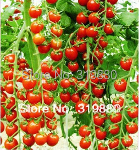 30 pcs/bag red pear tomatoes vegetable seeds for DIY home garden 90% survival plant seeds Free shipping