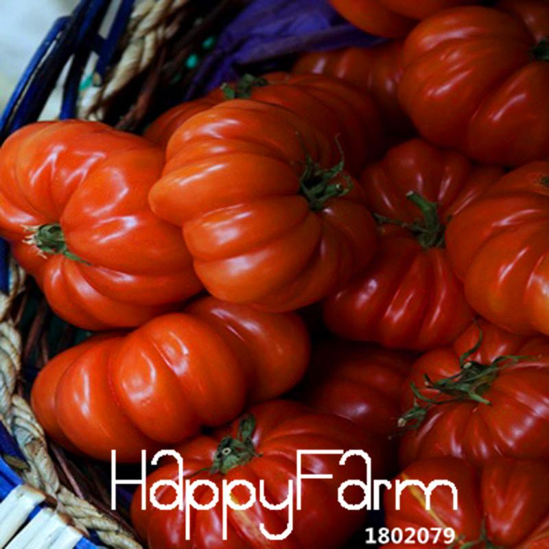 Big Sale!100 Seeds/Bag Like Pumpkin Tomato Seed Balcony Fruits Seed Vegetables Potted Bonsai Seeds Tomatoes,#EE4OWD(China (Mainland))