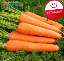 200 Seeds/pack Carrot Seeds Vegetable Seed Rich In Vc