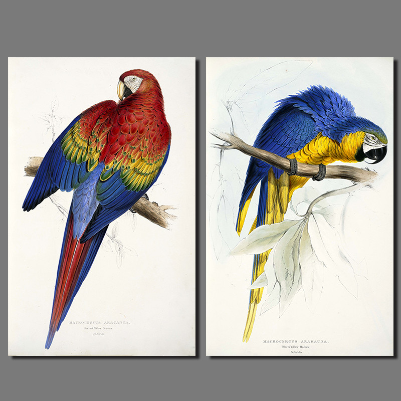 2pcs/set Parrot colorful birds decoration red green blue yellow wall art picture Canvas Painting for living room poster unframed(China (Mainland))