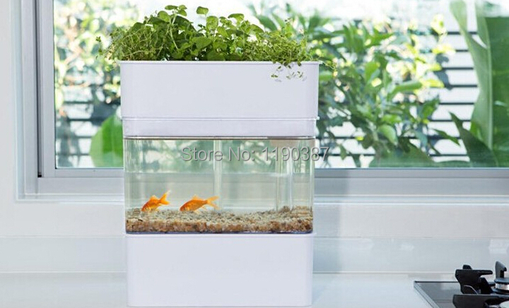 Aqua tanks november 2015 for Growing plants with fish