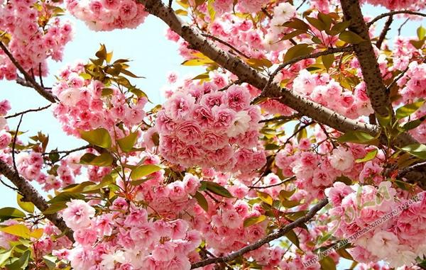 plantas de jardim lista: de flores plantas para jardim com um de confiança planta sementes de