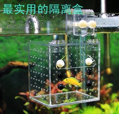 Decor Aquarium Guppy