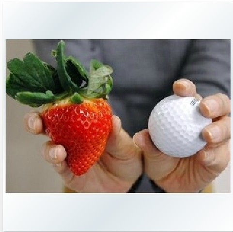 free shipping Vegetable seeds bonsai strawberry seeds edible strawberry four seasons large type big sweet taste