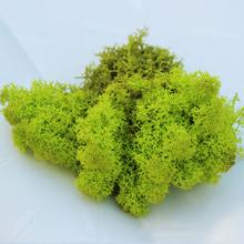 30 gram/package seca conservada teñido lichen musgo para terrario accesorios, fuentes de la joyería, DIY botella cristal de flores deoration(China (Mainland))