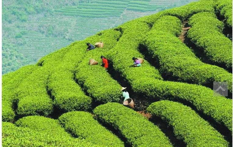 100g Spring biluochun tea 2015 green biluochun premium spring new tea green the green tea for