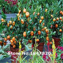 Ggg AAA Редкие Orange семена, 10 видов 30 смесь цветов цветок, высокая скорость Выживание для дома и сада.(China)