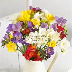 100 Freesia seeds , gorgeous DIY garden colorful & fragrant flower plant ,ideal decorative flower SEEDS for home garden(China (Mainland))