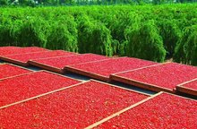 FREE SHIPPING pure goji 1000g Farm grown pure natural beauty nourishing blood tonifying kidney wolfberry Green
