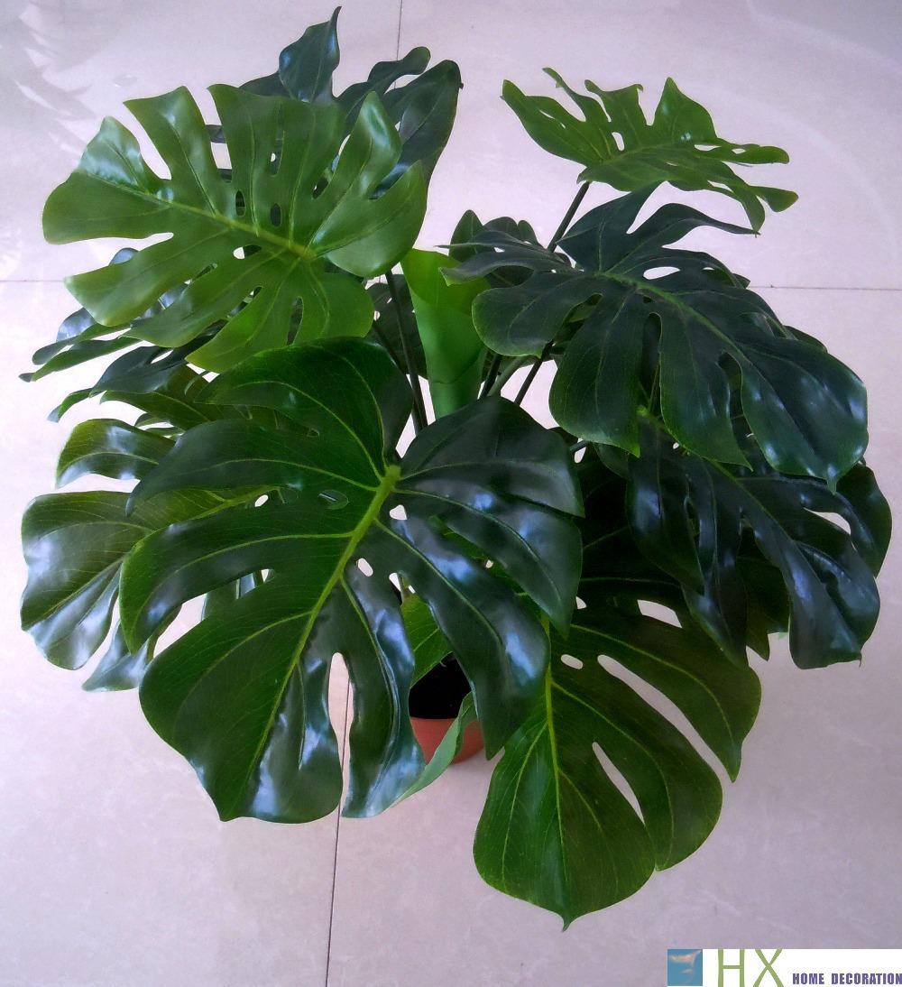 Acheter livraison gratuite 13 feuilles for Solde plante interieur