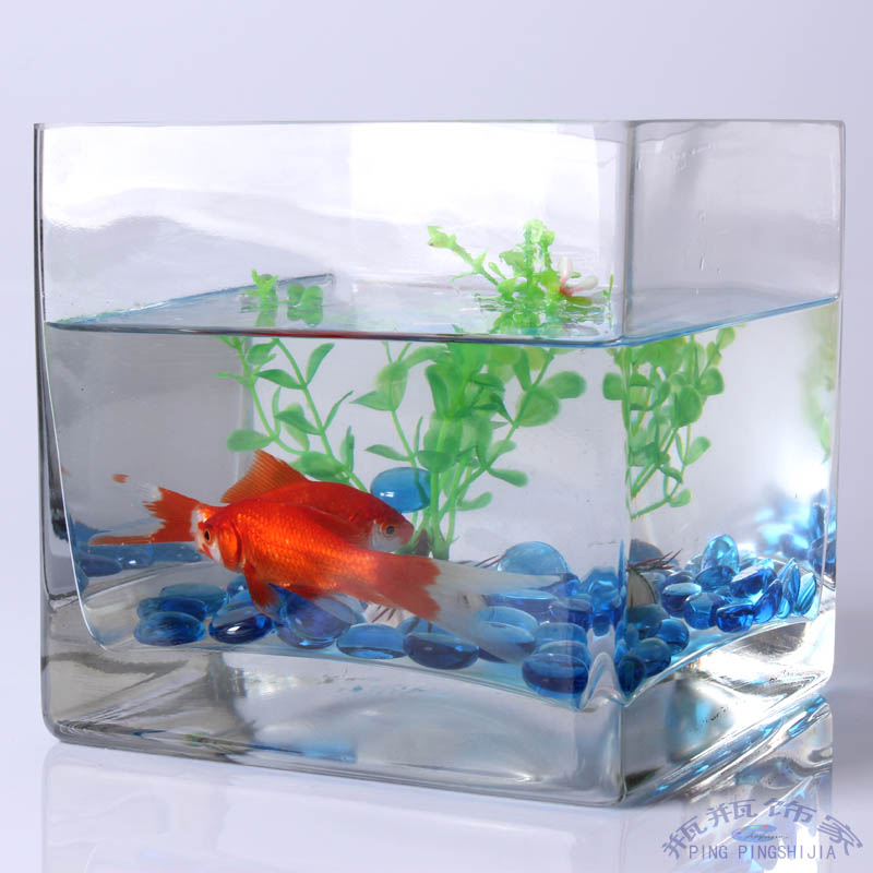 Small aquarium fish the image kid has it for Small glass fish tank