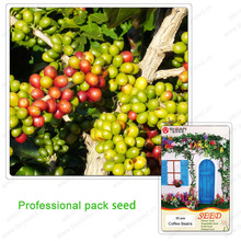 A Professional Pack Coffee Seeds Arabica Coffee Beans Seeds This is 100% Correct Seed True Seeds- 30 pcs / bag(China (Mainland))