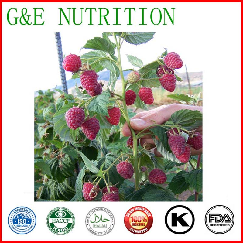 Hot selling!!!  High quality Raspberry Extract with free shipping<br><br>Aliexpress