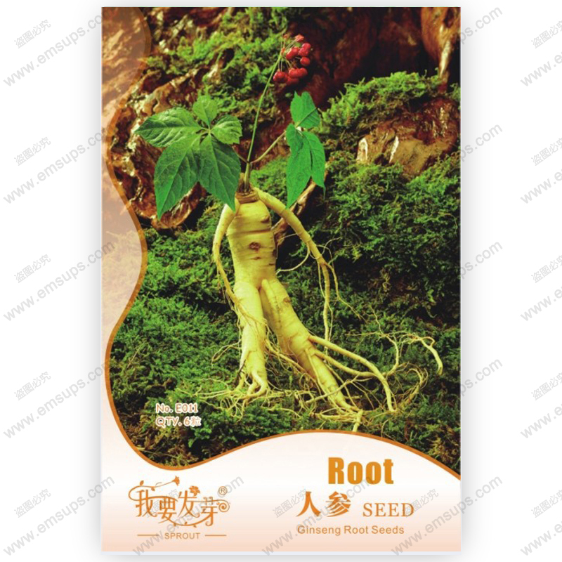 Original pack Chinese hardy Panax Ginseng Korea Ginseng seeds quality american ginseng, physical fitness, King of Herbs - 6 pcs(China (Mainland))