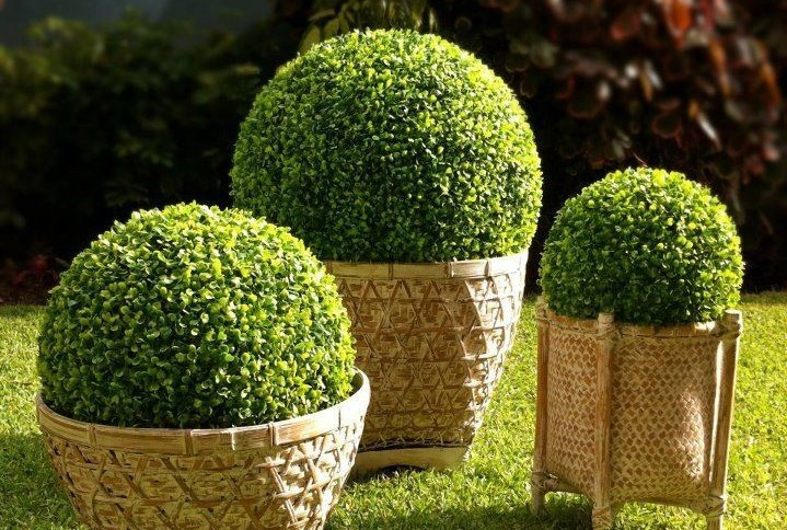 23cm Bonsai plants artificial plastic boxwood ball grass ball for indoor & outdoor decoration Christmas gift(China (Mainland))