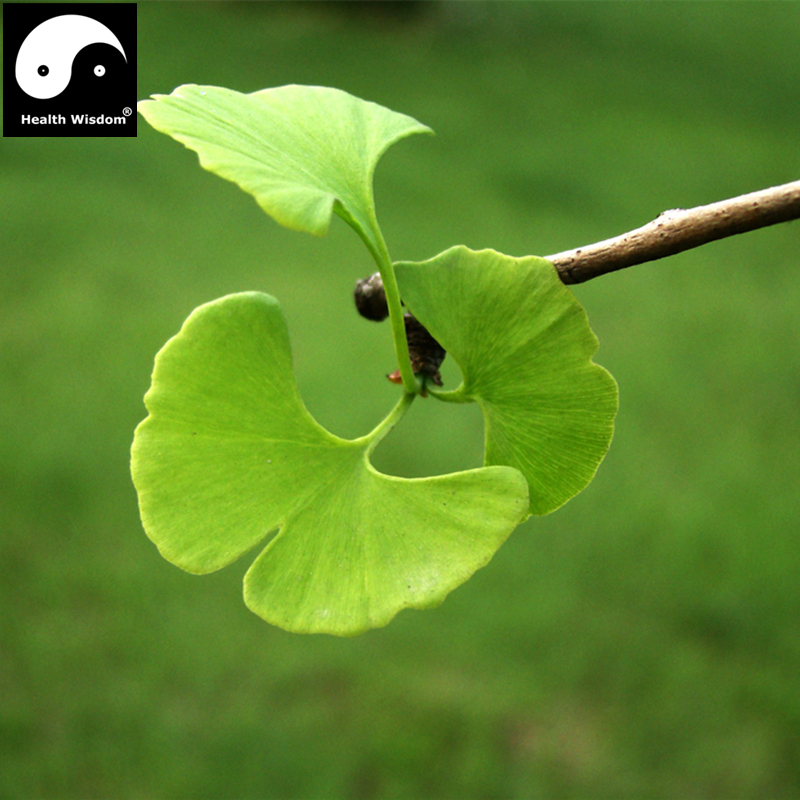 Dried Chinese Ginkgo Biloba Tree Fruits Nurtual Herbal Nuts Organic Lower Blood Pressure Health Care Herb