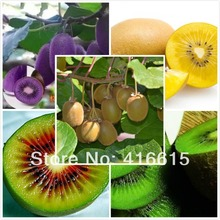 100 seeds/pack Fruit Seeds,Four Kinds Kiwi,Red Yellow Green Purple,Nutrition Is Rich,Very Tasty And Delicious(China (Mainland))