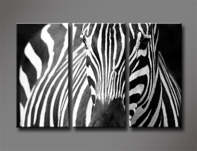 Black and White Zebra ...