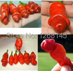 5pcs Chilly Red Hot Peter Pepper seeds novelty funny pepper Pornographic Pepper seeds bonsai seeds DIY home garden Free Shipping(China (Mainland))