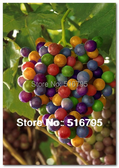 2015 New Colorful Rainbow Grape Organic Seed 150pcs/lot Rare Species Bonsai Tropical Fruit Seeds Free Shipping(China (Mainland))