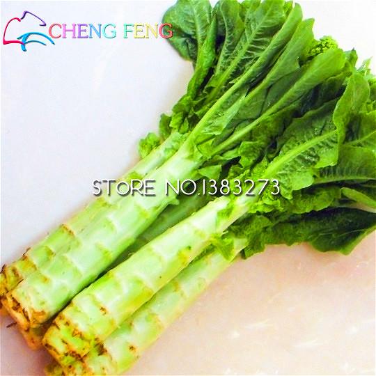 Салат спаржевый выращивание из семян 88