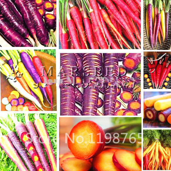 Free Shipping 200pcs/Mixed colors rainbow carrot seeds Vegetable seeds carrot crazy varieties fruit seeds loseweight health care(China (Mainland))