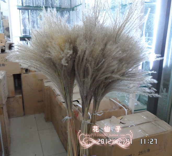 Dried flowers reed rush straw water candle movie props decoration(China (Mainland))