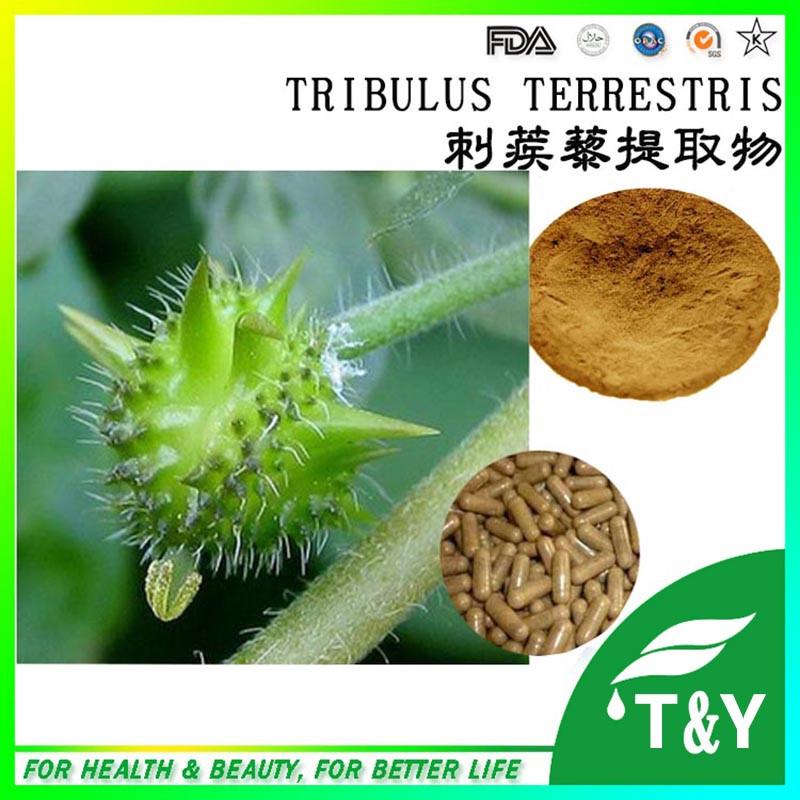 tribulus terrestris extract capsule/high quality tribulus terrestris extract 500mg * 400pcs<br><br>Aliexpress