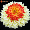 2016 New Arrival Rare Yellow Orange Dahlia Seeds Charming Chinese Flower Seeds Bonsai Plants for Garden
