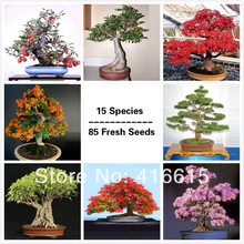Premium Bonsai Package – 15 Species – 85 Fresh Seeds,Excellent Bonsai Subject PLUS MYSTERIOUS GIFT