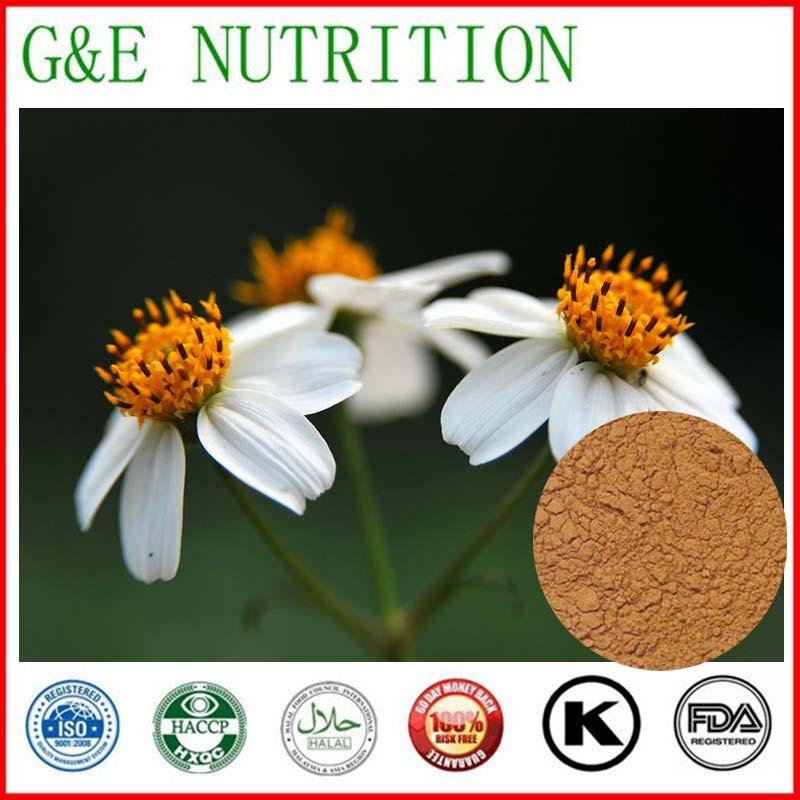 Standardized Bidens Pilosa Extract Powder Supplier Ratio 10:1 500g(China (Mainland))