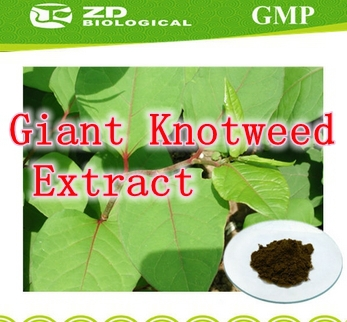 Здесь можно купить  3 bottle Highest Purity Giant Knotweed Extract Resveratrol>98%caps 250mg X 270pcs free shipping 3 bottle Highest Purity Giant Knotweed Extract Resveratrol>98%caps 250mg X 270pcs free shipping Красота и здоровье