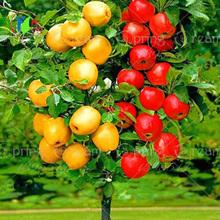 Buy 30 pcs Bonsai Apple Tree Seeds rare fruit bonsai tree-- indoor plant home garden free via hongkong post airmail for $1.58 in AliExpress store