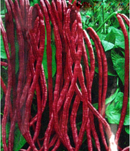red bean seeds for home garden free shipping outdoor plant 10 seeds(China (Mainland))